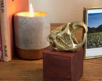 no.6 || golden muskrat skull on wooden block