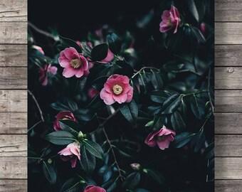 Printable art | camellia flowers photo | Botanical camellia | pink black white floral | photography flower art print | instant download