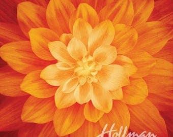 "Supernova Flower Orange Fire Dream Big Digital 43"" Fabric Panel"