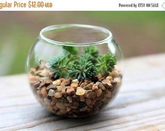 Save25% Terrarium fishbowl in miniature-Tiny sedum planter-Sedum Lydium-Sedum blue carpet