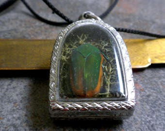 Insect Jewelry Beetle Amulet Pendant Natural History