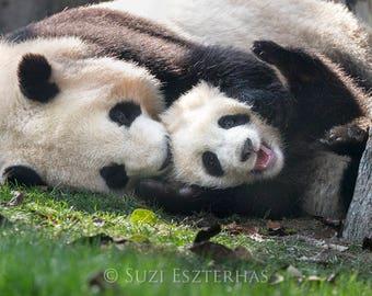 BABY PANDA and MOM Photo Print, Mom and Baby Animal Photography, Baby Animal Prints, Safari Baby Nursery Art, Baby Nursery Decor, Zoo
