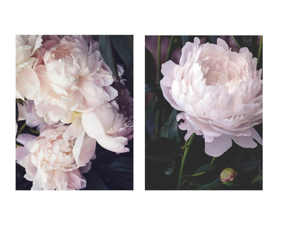 Peony Pair, Still Life Prints, Nature Flower Art, 2 Prints,  Blush Peonies, Home Decor, Pastel Art, Girls Room Photography, Botanical Photos