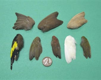 8 Single Finch Dried Birds Wings Feathers Art Craft Taxidermy Various Colours  Shipping Included