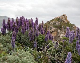 California Wildflowers Photograph
