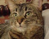 Custom Portrait for Molly, 6x6 Cat Portrait of Gobi