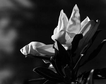 Magnolia in Black& White photo, wall decor, home decor, flower decor