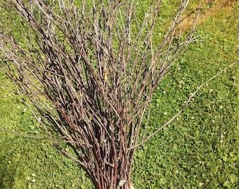 Birch Twigs