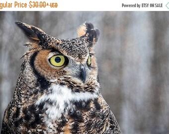 ON SALE Great Horned Owl Fine Art Bird Photography, Home Decor Art Print, Bird in the Forest Wall Art, Nature Print, Bird Lover Art, Owl Dec