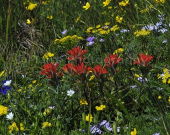 Yellow Purple Red Green Wildflowers Coast Range Mountain Top Meadow Oregon, Fine Art Photography matted & signed 5x7 Original Photograph