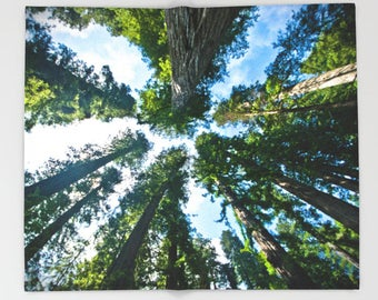 Sherpa Fleece Throw Blanket: Valley of Giants; Redwood National Forest [California west coast forest hike surf sunshine muir woods Sequoia]