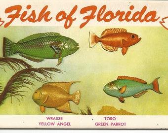 Vintage 1940's Souvenir of Fish Of Florida Post Card Book