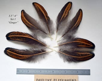 Feathers 3-4 inches Matched Pairs Black and Brown Ginger