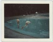 Flamingos, Marineland, 1964: Vintage Polaroid Snapshot Photo (84662)
