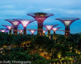 Singapore Supertree Grove  Art Print Landscape Photography