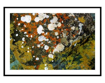 Contemporary Art for Office, Modern Decor for Men, Lichen Art Print, Nature Photography, Gift for Biologist