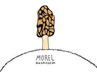 Morel. illustrated