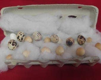 Blown/Hollow Button Quail Eggs 18 eggs-Crafts-DIY-taxidermy-blown out eggs./egg