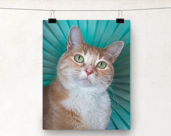 Shelter Cat, Ginger Cat, MEOW Foundation, Fine Art Photography