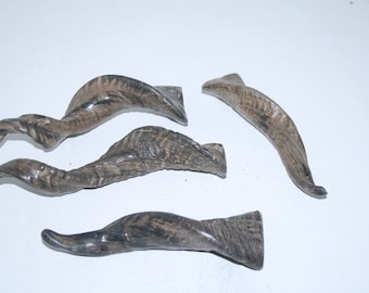 4 Goat horns ....  e4b82  ... Natural colored polished cow horns.,.....