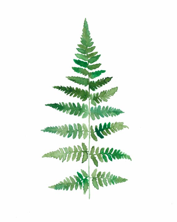 Original 8x10 Fern Watercolor Painting