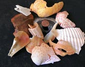 Almost free shell pieces - shell craft supplies - girl scout projects - church and school projects- shell pieces -