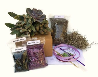1 Large Succulent Terrarium DIY (refill) Kit of your choice without the Terrarium-Gardener Gift-Housewarming Gift-Succulent Starter Kit