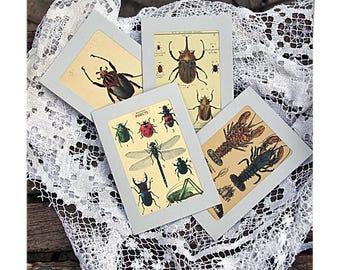 Quartet of curio cabinet cards