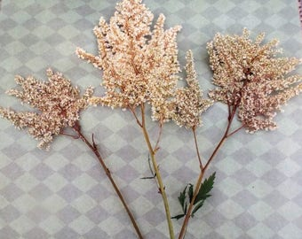 Dried Flowers 5 piece