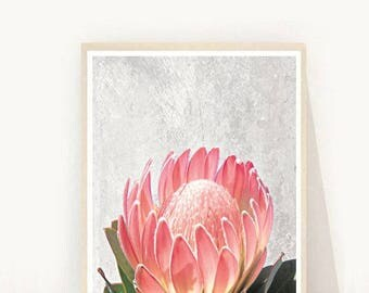 Native flowers, Protea Print, Protea Printable, Printable Art, Instant Download,  Pink Flower, Wall Decor