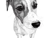 "Pet Portrait, Custom Pet Portrait, Illustration, drawing, gift, art, your pet 8""x10"" or 11""x14"" print and JPG & PDF file-Example here"