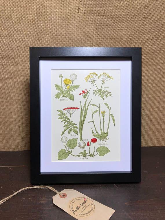 Botanical Book Plate Print - Mounted Vintage Herbal Plant Illustration - Dandelion - Caraway - Elder - Garlic - Ginger Root - Coltfoot