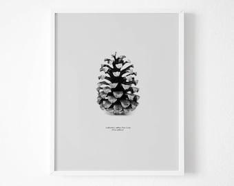 Pine cone decor, Forest print, Botanical print ,Black and White Photography,Pine Cone Print, Pine Cone Decor, Nature Art