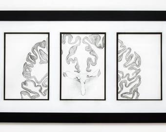 Brain Cross Section Triptych