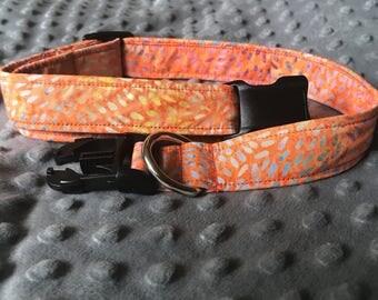 Orange multi colored dog/cat color