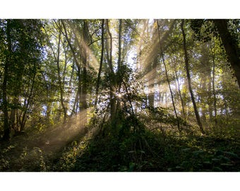 Forest - Lorraine