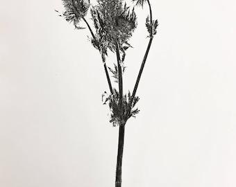Grass Texture Monoprint