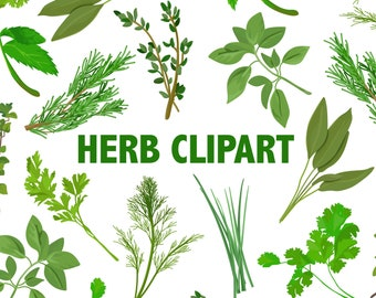 HERBS CLIPART - 10 digital images - rosemary thyme basil cilantro dill sage mint oregano chives parsley scrapbook clip art Instant Download