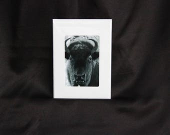 Bison photograph notecard