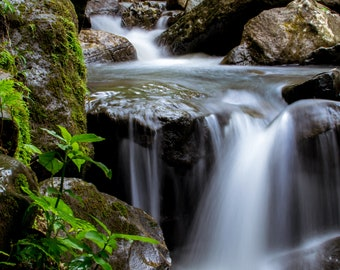 Yunque Rainforest Waterfall photo print
