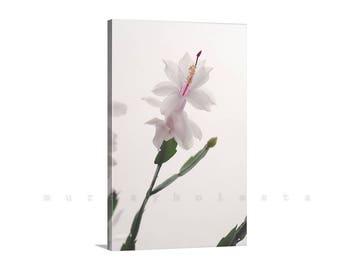 Cactus Flower Photograph, Giclee Canvas Print, Winter Cactus, Vertical Wall Art, Floral Art, Flower Print, Minimalist Art, Ready to Hang