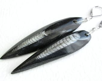 Prehistoric Orthoceras Earrings, Long Stone Cephalopod Fossils, Science Jewelry