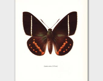 """Butterfly Print (1960s Wall Decor, Natural History Book Art) Vintage Butterfly Print --- """"Day Flying Butterfly"""" No. 44-2"""