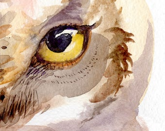 Owl watercolor, giclee print of original bird painting