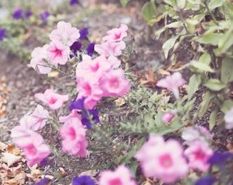SALE Nature photography, flower photography, canvas wall art, canvas art, flower print, large art, large wall art, soft wall art, soft art