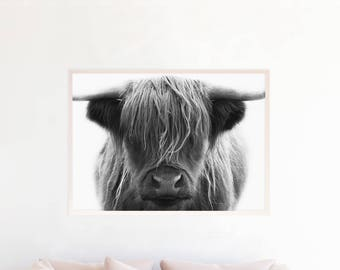 Highland Bull Print, Highland Cow Printable Wall Art, Download Black and White Photography, Cattle, Farm Animal, Nursery Art Poster, hc1zlbw