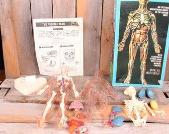 1977 Revell Brand Visible Man Anatomy Male Science Model Kit Vintage