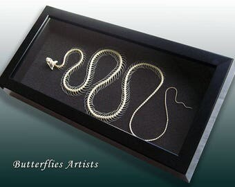 Snake Skeleton Dendrelaphis Pictus Real Taxidermy Collectible Museum Quality In Display