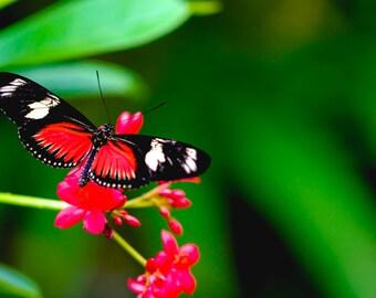 Butterfly Photography, Butterfly Photo, Butterfly Art, Butterfly Print, Nature Print, Nature Photography, Fine Art Photography, Butterfly
