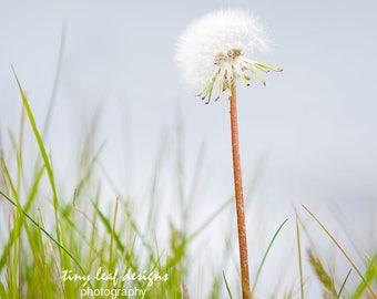 Beach Wish Stick Original Photography Limited 8 x10 matted 11x14